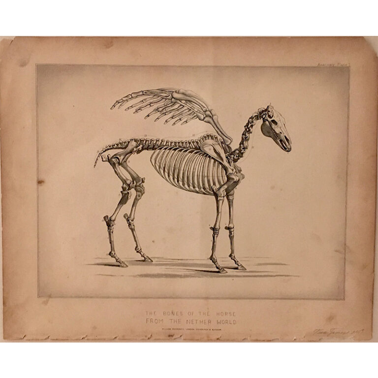Horse from the Netherworld